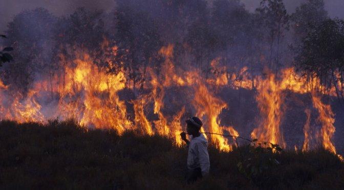 África también está en llamas