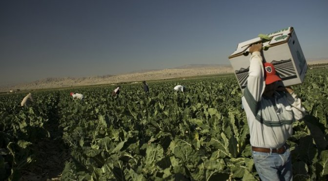 La Covid-19 y los trabajadores agrícolas y empacadores de carne inmigrantes en los EE.UU