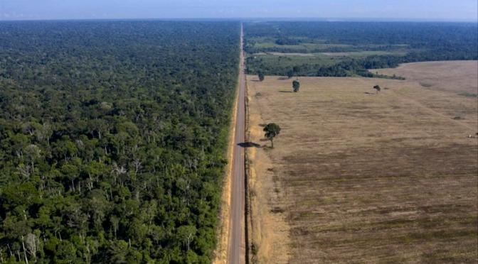 """Pollos británicos impulsando la deforestación en la """"Segunda Amazonia"""" de Brasil"""