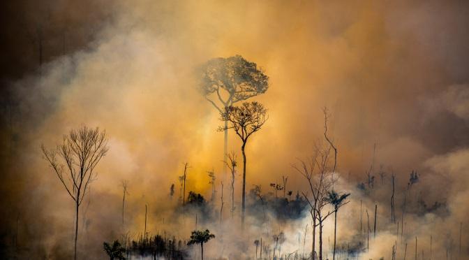 La deforestación del Amazonas supera los 11.000 km2 en Brasil, alcanzando el nivel más alto de los últimos 12 años.