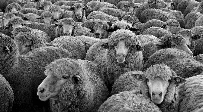 El síndrome de la oveja